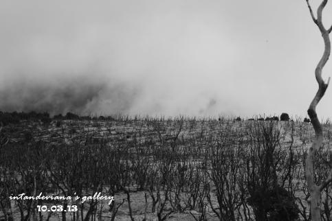 Hitam putih di Hutan Mati