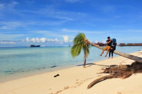 Pohon kelapa yang sudah setengah tumbang ini masih kuat menahan beban kami berdua