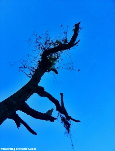 Ada yang bilang ini adalah akar langit
