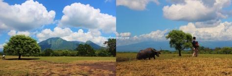Savana Bekol dan gunung Baluran